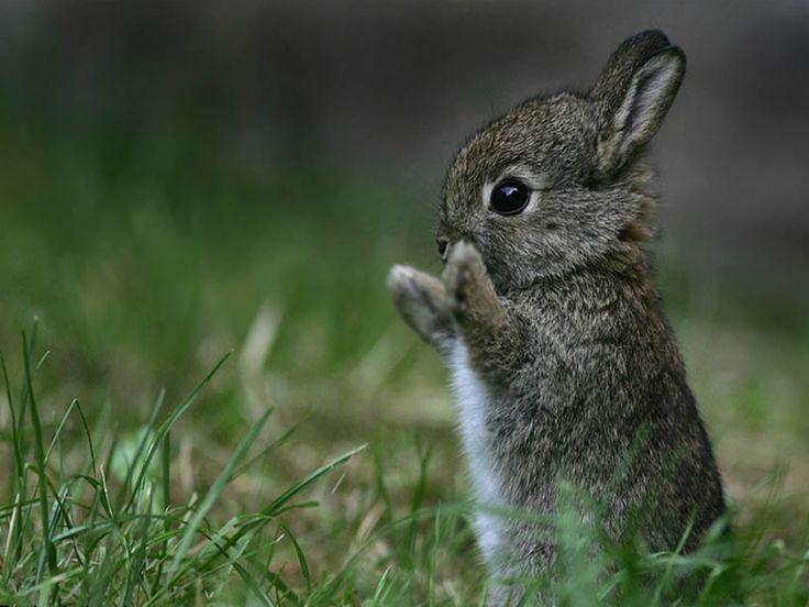 Sélection de bébés animaux trop mignons à la fourrure ultra douce qui vous donnerons envie de les avoir près de vous cet hiver.