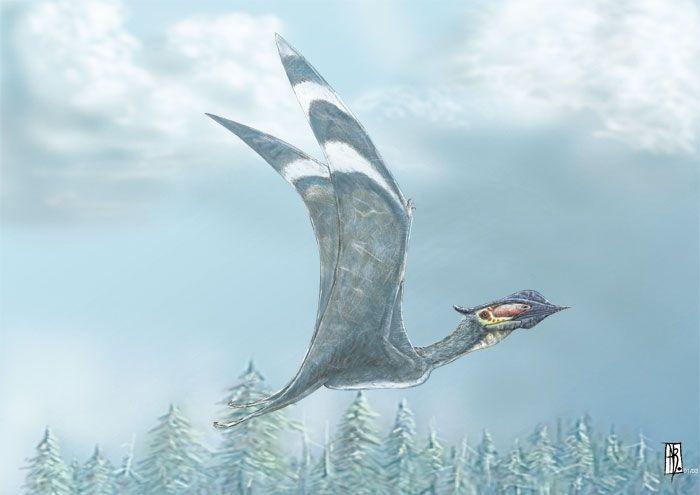 179 best pterosaurs images on pinterest prehistoric