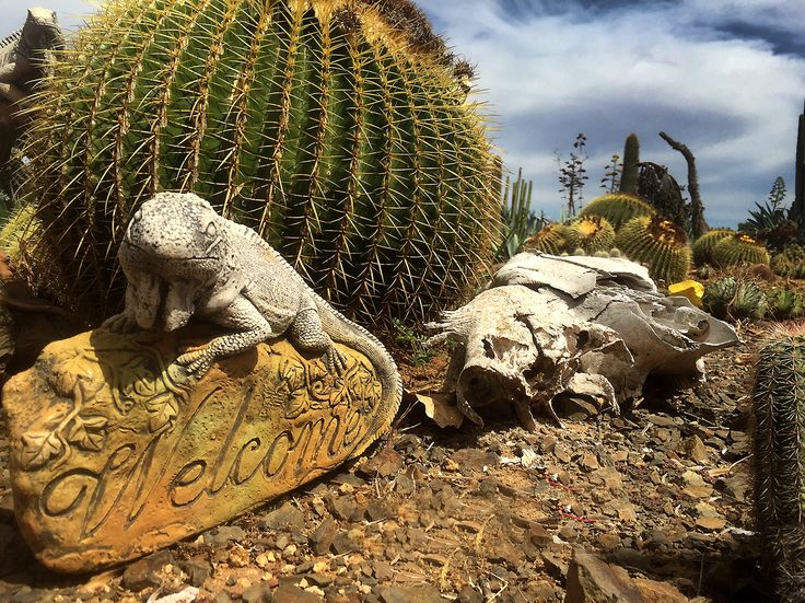 Hello from the Cactus Farm #lizzard #cactus #travel
