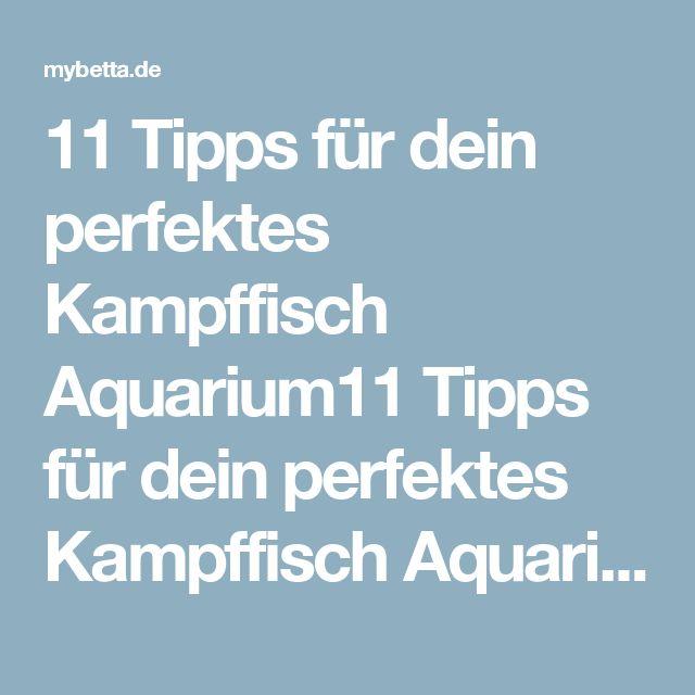 11 Tipps für dein perfektes Kampffisch Aquarium11 Tipps für dein perfektes Kampffisch Aquarium