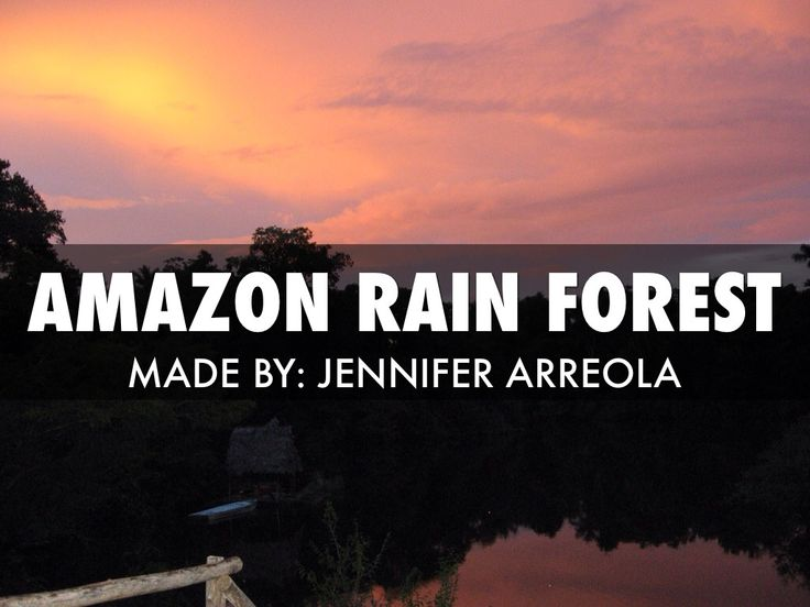 """Amazon Rainforest"" - A Haiku Deck #setyourstoryfree"