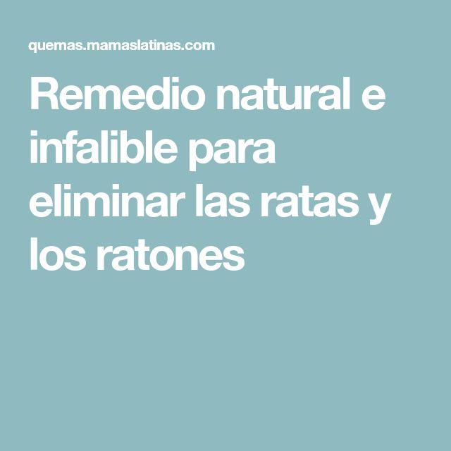 Remedio natural e infalible para eliminar las ratas y los ratones