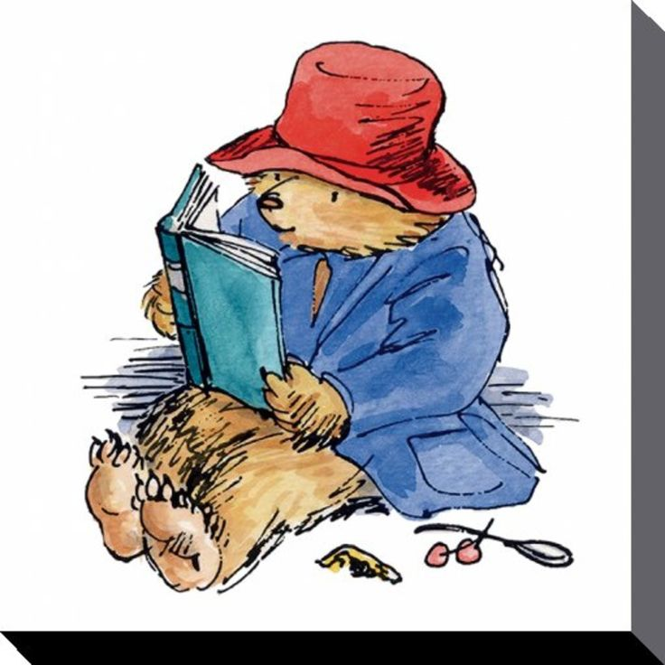 Paddington Bear - Reading - Canvas Print 40 x 40 cm