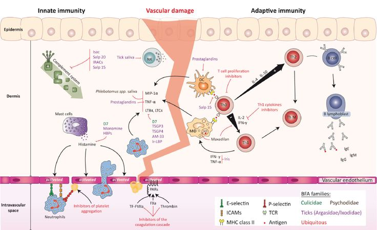 biol2300 adaptive immunity The human immune system is an to make deep reading of the immune system a reality adaptive ceo and co-founder chad robins said.