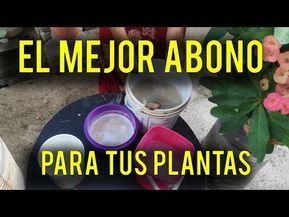 SUPER ABONO CASERO / ESTO HARÁ QUE TUS PLANTAS FLORESCAN COMO NUNCA - YouTube Vertical Farm, Compost, Bonsai, Gardening Tips, Cactus, Gardenias, Plantar, Youtube, Montessori