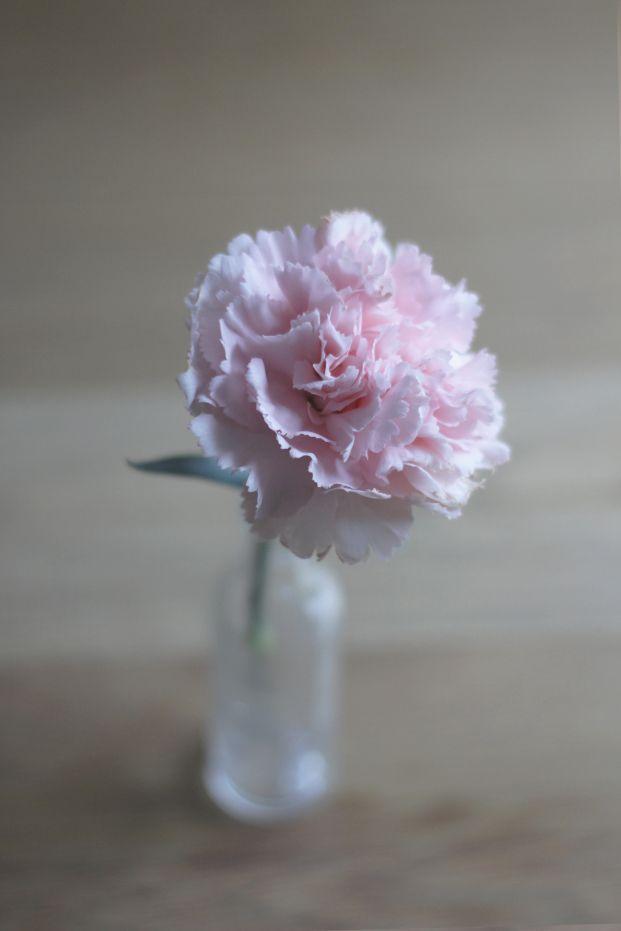 la mariee aux pieds nus Oeillet J'ai toujours apprécier les oeillets, c'est plus fluffy que certaines roses