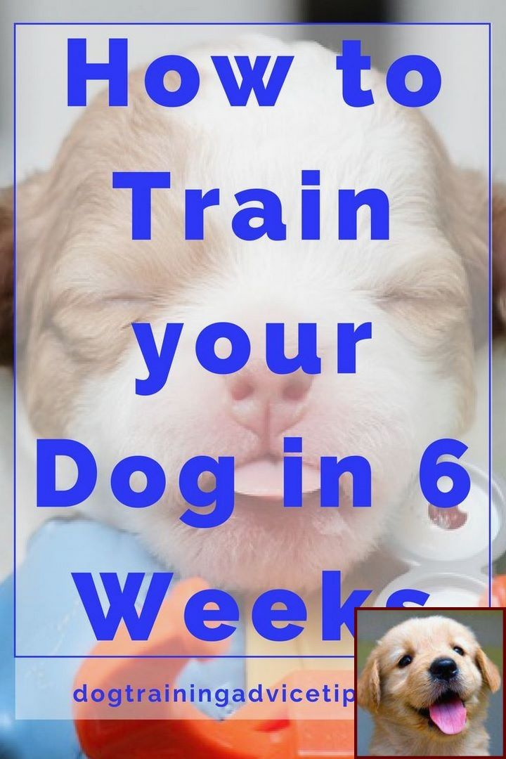 House Training A Puppy How Long Does It Take And Dog Training