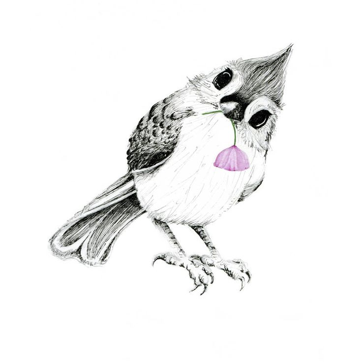 original_tufted-titmouse-giclee-art-print.jpg (900×900)