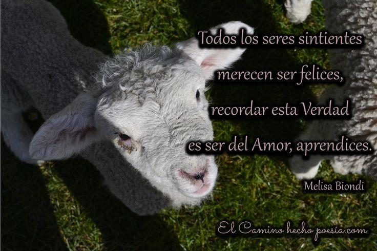 Respetemos el derecho a la vida de todos los seres sintientes ♥   www.elcaminohechopoesia.com