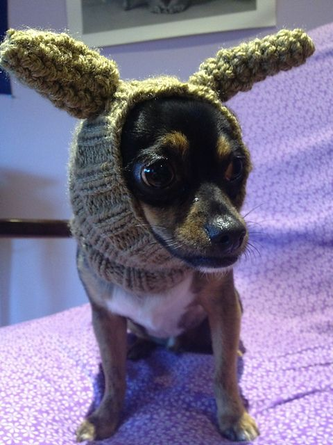 30 best Knitting & Animals images on Pinterest   Knitted ...
