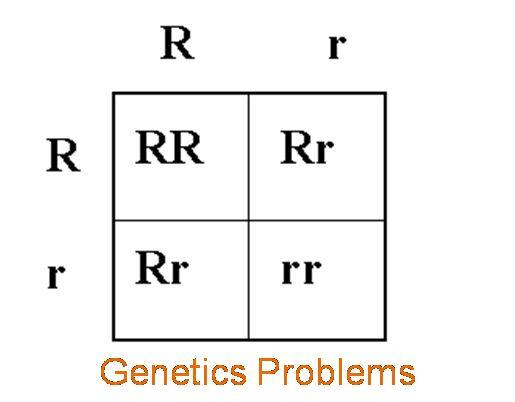 genetics problems bio 30 Important genetics questions in the  in mendelian genetics,  30 questionif mendel had a homozygous tall plant what.