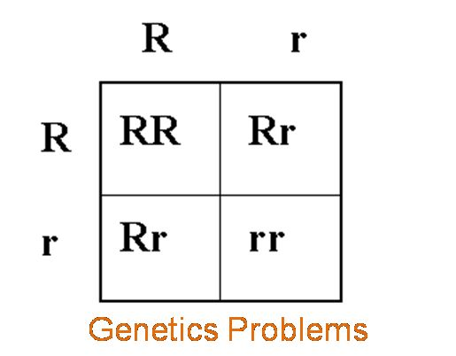 genetics practice problems ptc cross over percentage probability genetics problems. Black Bedroom Furniture Sets. Home Design Ideas