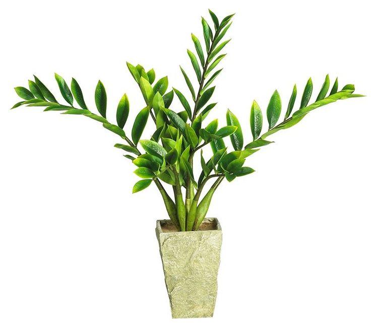 Oltre 1000 idee su piante da interno su pinterest piante - Piante che purificano l aria in camera da letto ...