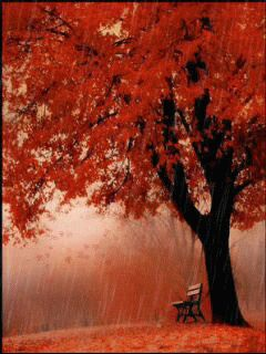 red tree Mobile Screensavers available for free download.