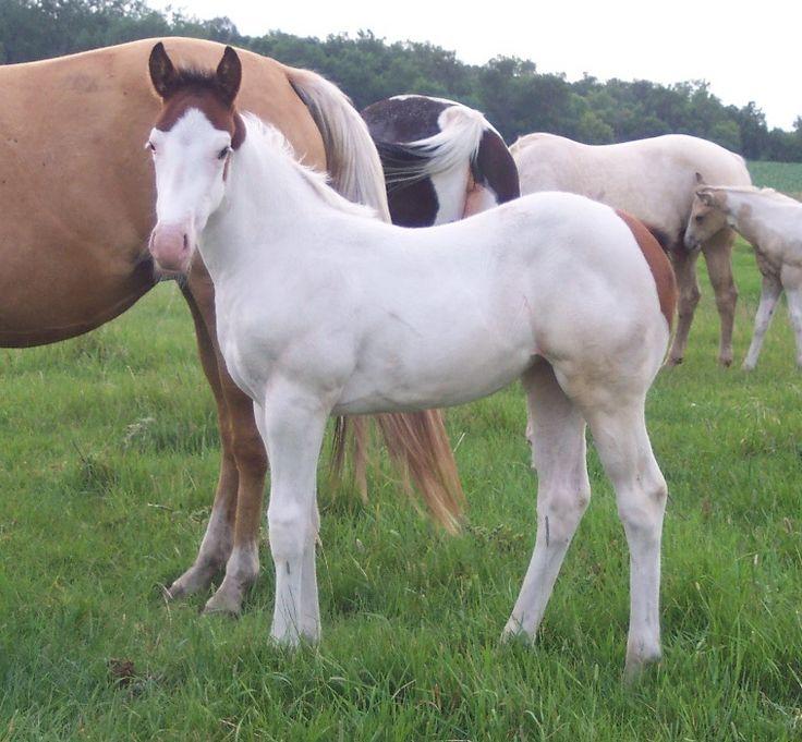 Beautiful Medicine Hat foal