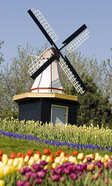 Dutch Windmill and Tulips. Holland, Michigan