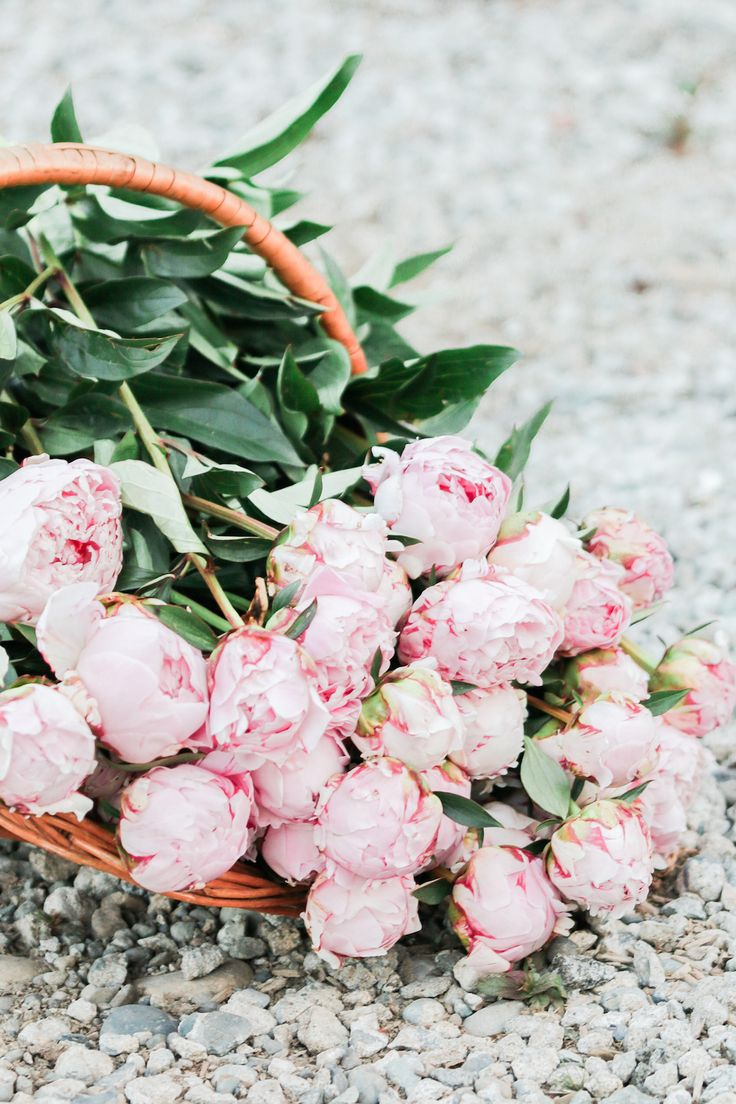 Basket of Peonies | Flowers from the farm | http://monikahibbs.com
