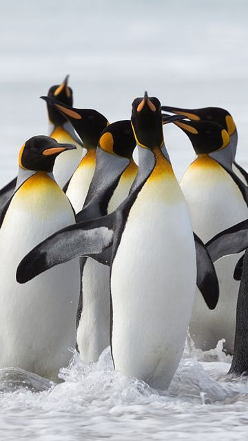 20 best Penguins - Be yourself... unless you can be a ...