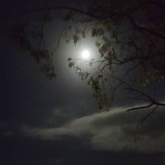 On the first night of the year the sky was bright... #supermoon #nightsky #androidphotography #moon #fullmoon #2018 #newyear #sydney #portents #signs #romance #howl #lunar #nightphotography