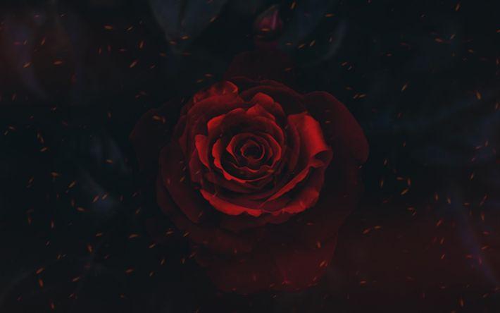 Download wallpapers red rose, art, black background, rose bud