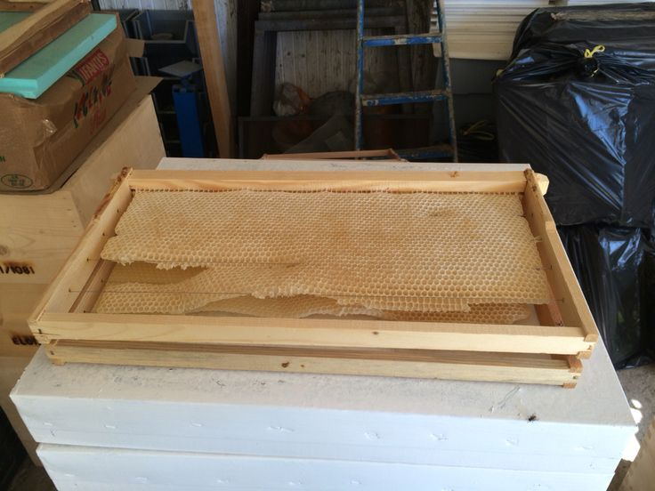Frames with bees wax