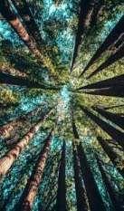 New Background Hintergrundbilder Nature 21 Ideas