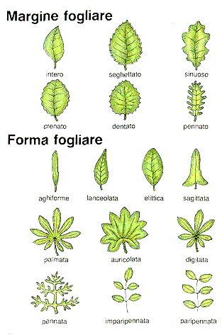 Classificare le foglie