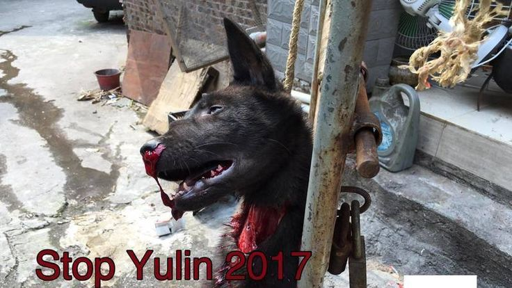 Petition · Mr. Chen Wu please END DOG MEAT in Guanxi Province · Change.org / https://www.change.org/p/mr-chen-wu-please-end-dog-meat-in-guanxi-province?recruiter=298248057&utm_source=share_petition&utm_medium=facebook&utm_campaign=autopublish&utm_content=nafta_share_post_title_en_1%3Acontrol