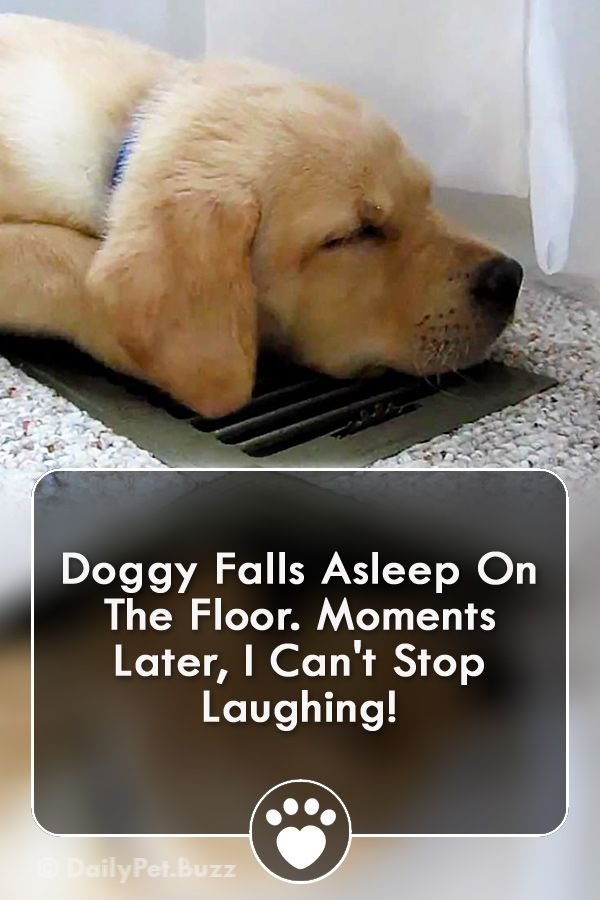 Doggy Falls Asleep On The Floor Moments Later I Can T Stop Laughing Dogs Dogvideos Animals Animalvideos Laughing Dog How To Fall Asleep Dog Quotes Funny