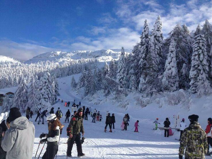 Inverno ad Andalo, Trentino.
