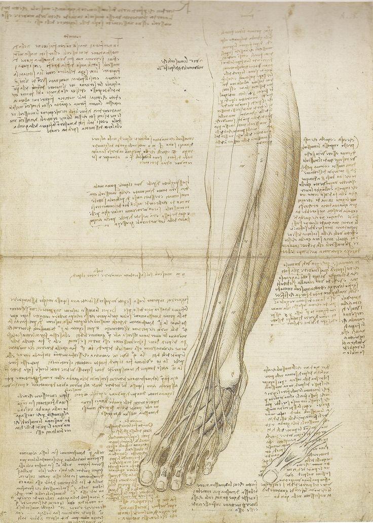 Leonardo da Vinci | The Mechanics of Man
