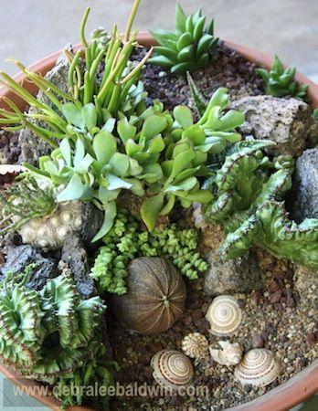 Succulent Tide Pool Garden - Debra Lee Baldwin: Gardens Ideas, Ideas Gardens, Pools Gardens, Tide Pools, You, Growing, Plants Gardens, Great Ideas, Gardens Succulents