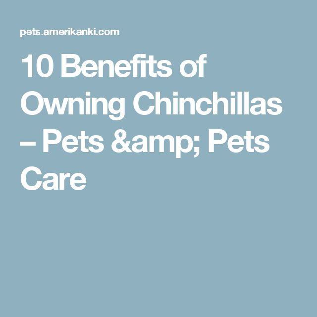 10 Benefits of Owning Chinchillas – Pets & Pets Care