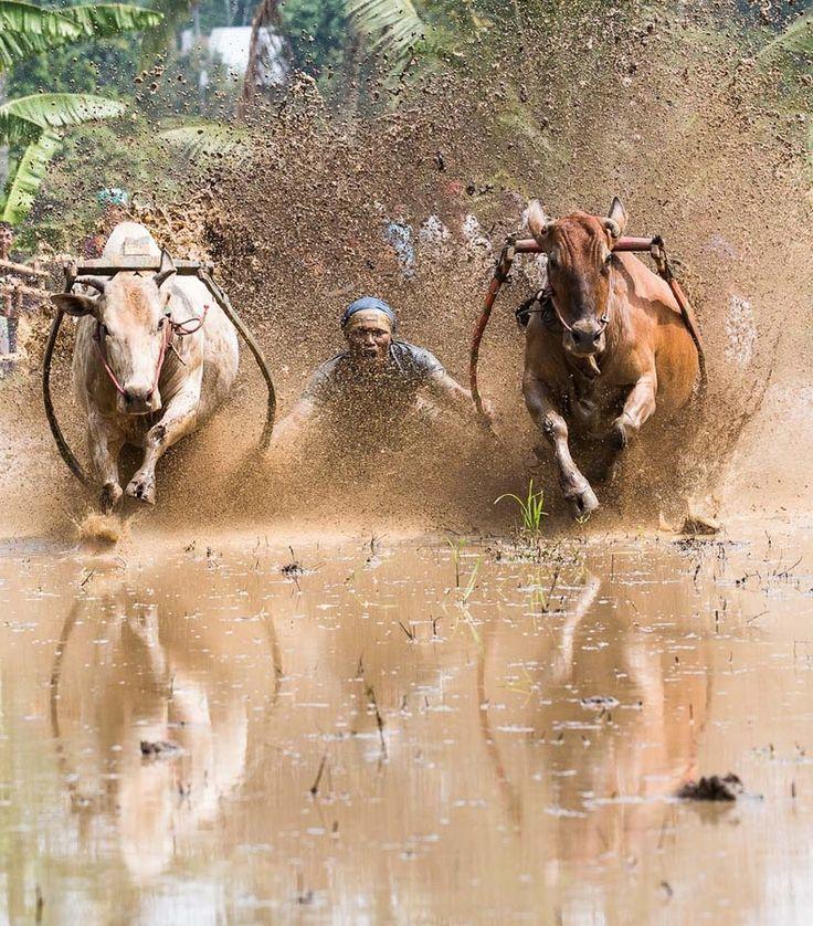 www.villabuddha.com Bali vakantie  Villa € 1495,- a week Bull Run (Padang, Sumatra)