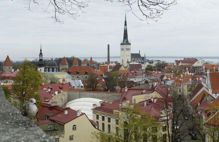 Szerokie spojrzenie na miasto. Tallin, Estonia. Fot. Jan Gołąb