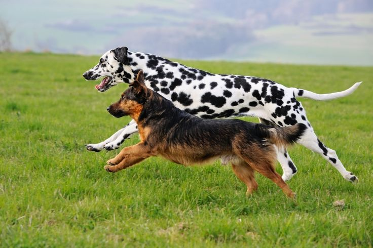 Leading the Pack to Protein - Pet Product News - March 2017 - Grain-free, limited-ingredient and raw foods, coupled with consumers shying away from carbohydrate-laden fare, all have contributed to an increase in the availability of high-protein dog foods.