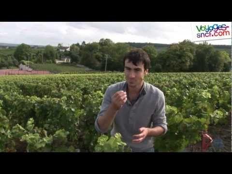 Vidéo la route du Champagne, tourisme autour de Reims. - YouTube