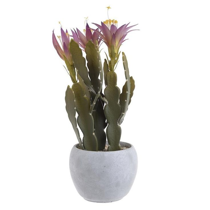 Cactus In A Pot - Flowers - Plants - DECORATIONS - inart