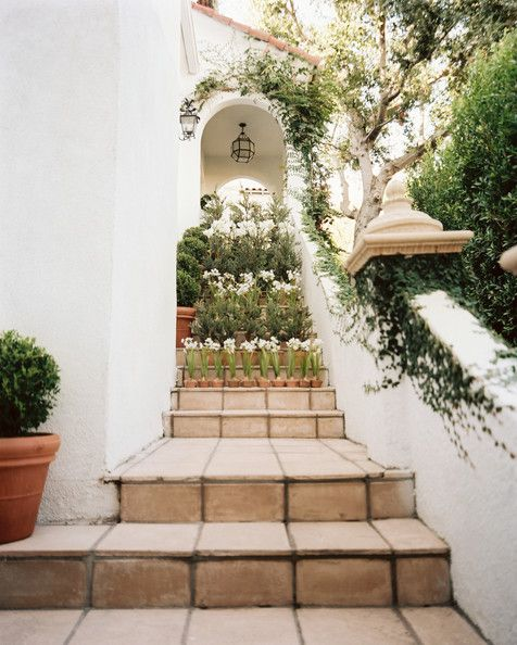 Mark D. Sikes & Michael Griffin- Steps leading to a grouping of potted paperwhites and boxwoods
