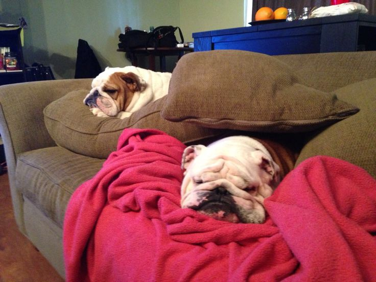"❤ Pickle & Harvey have made rules -- ""Dog Fort -- No humans allowed -- well without treats"" ❤"