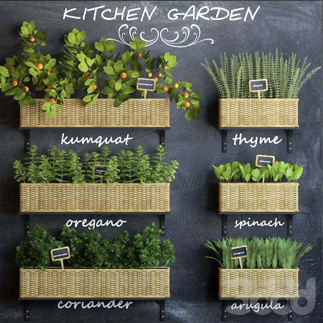 Kitchen garden 3