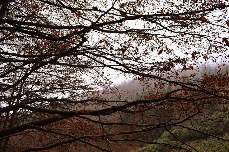 Magic Winter. Italia.Biella.Trivero.Oasi Zegna. #oasizegna #concadeirododendri #winter #trivero #biella @Oasi Zegna