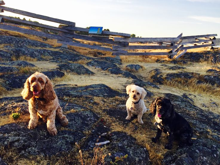 Rufus, Sophie, and Max at High Rock Park