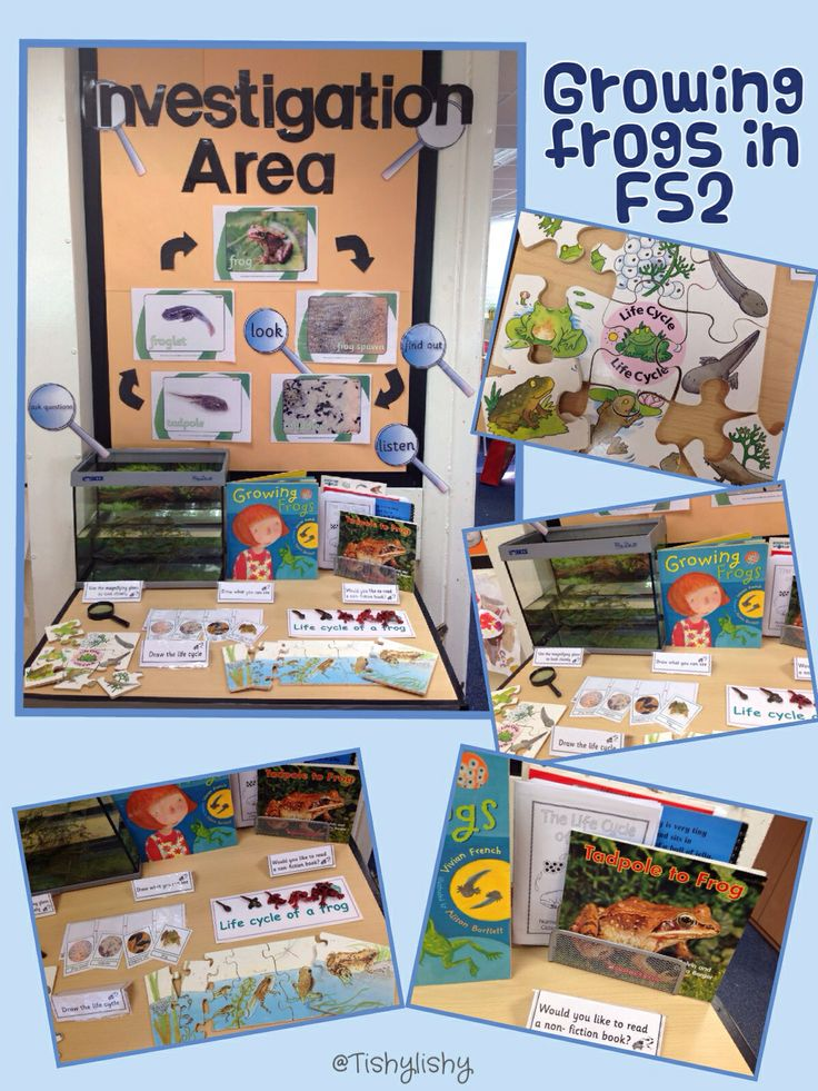 """Growing frogs"" interactive display. Jigsaws, fiction and non fiction books, life cycle sequencing. (Just need the frogspawn!)"