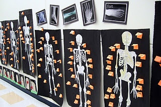 found this and I thought of 3rd grade?     @Jessica Weir    My class just finished learning about the skeletal system. We used http://www.eskeletons.org/pdf/000646791.pdf for the printable skeletons.