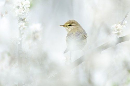 Spring bird by Jeffrey Van Daele