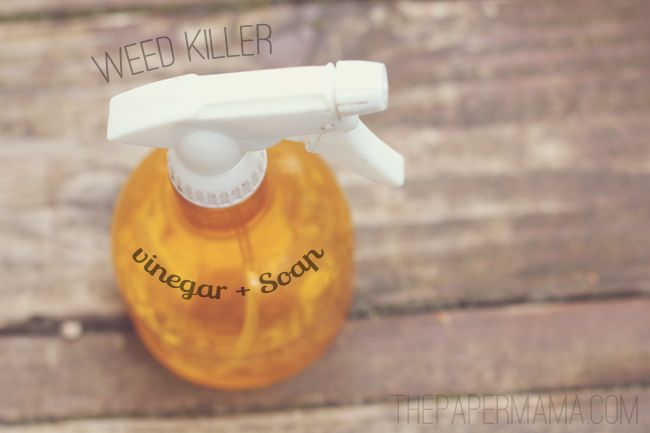 Natural weed killer::2c white vinegar + 1T dish soap + 1T. salt. Blend and pour into a spray bottle. Will kill anything! (Easily gets rid of all those weeds growing in the cracks and seams of the driveway.)Weed Killer recipe - The Paper Mama