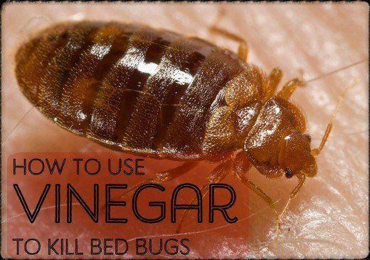 Pin On Pest Control Gear