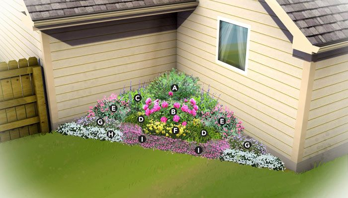 Northeast Corner Garden Plan PLANT LIST A) Butterfly bush (Buddleia davidii 'Nanho Blue')  B) Peony (Paeonia) C) Blue false indigo (Baptisia australis) D) Daylily (Hemerocallis) E) Jupiter's beard (Centranthus ruber) F) Daffodils (Narcissus) G) Pincushion flower (Scabiosa columaria 'Butterfly Blue') H) Evergreen candytuft (Iberis sempervirens) I) Cheddar pinks (Dianthus gratianopolitanus)