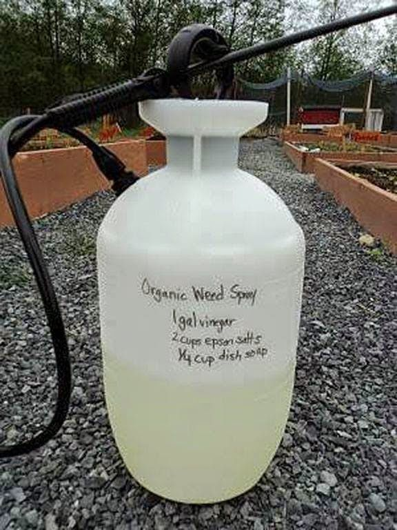 All Natural Weed Killer!! Recipe:  1 Gallon Vinegar  2 Cups Epson Salt 1/4 Cup Dawn Dish Soap